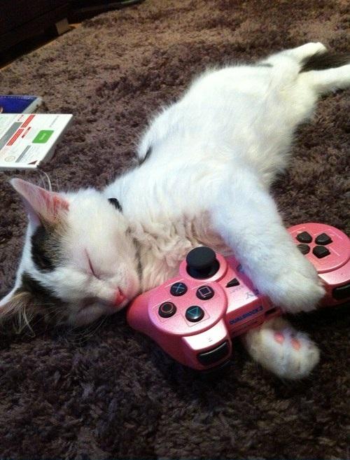 Chat gamer