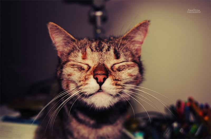 Chat va bien tout va bien :)