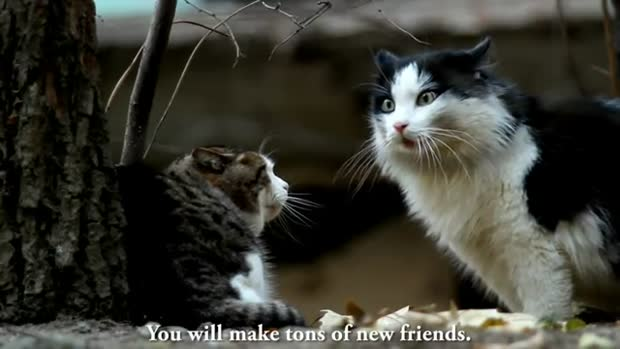 Plein d'amis