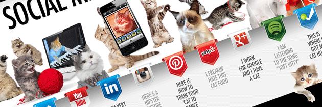 Chats et médias sociaux